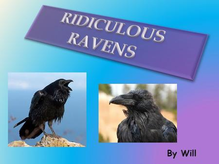 Do you know which bird is massive and black all over? It's a raven! If you do not know about a raven or if you do not know what a raven is, then you are.