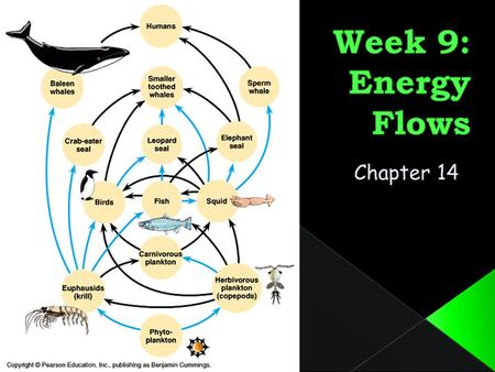 LEARNING OUTCOMES By the end of this week, you should: Be able to describe the ways in which energy flows through ecosystems. Recognise that matter cycles.