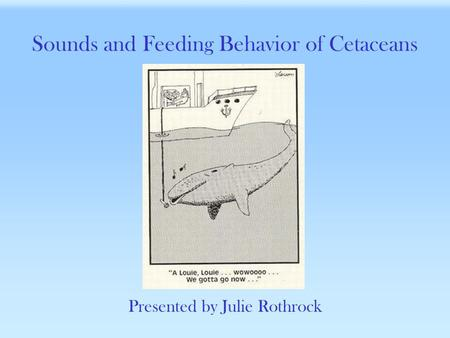 Sounds and Feeding Behavior of Cetaceans Presented by Julie Rothrock.