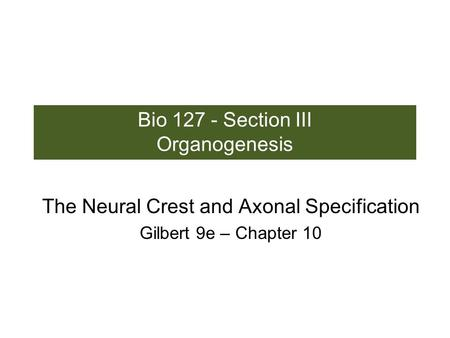 Bio 127 - Section III Organogenesis The Neural Crest and Axonal Specification Gilbert 9e – Chapter 10.