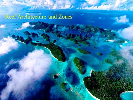 Reef Architecture and Zones. Reef Architecture -Structure of a 'Typical' Caribbean Reef (Goreau)