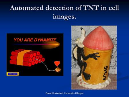 Erlend Hodneland, University of Bergen Automated detection of TNT in cell images.