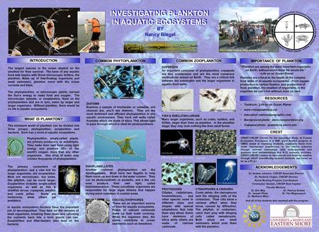 INTRODUCTION RESOURCES COMMON ZOOPLANKTON ACKNOWLEDGEMENTS COMMON PHYTOPLANKTON The largest species in the ocean depend on the smallest for their survival.
