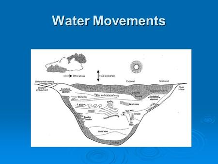 Water Movements.  Transfer of wind energy to water  Modified by gravity, basin morphometry and differential water densities to produce characteristic.