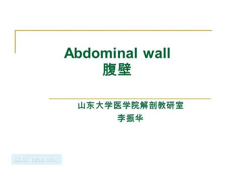 Abdominal wall 腹壁 山东大学医学院解剖教研室 李振华. Boundaries of the abdomen Boundaries Superiorly - xiphoid process, lower border of costal arch, 11th and 12th ribs,