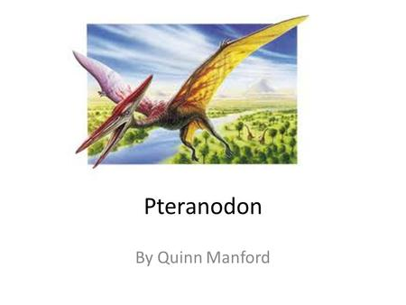 Pteranodon By Quinn Manford. When Pteranodons Flew The Pteranodon lived a long time ago in the Cretaceous period. They come in many different.