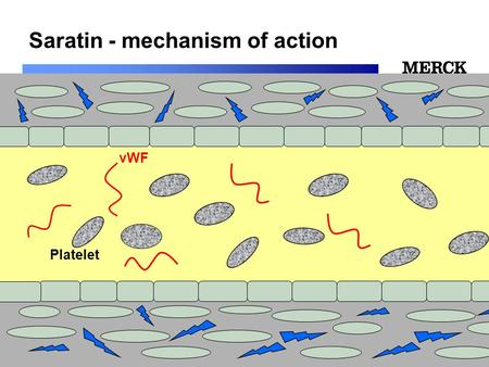 Biomedical R&D Folie (slide) 1 Saratin - mechanism of action vWF Platelet.