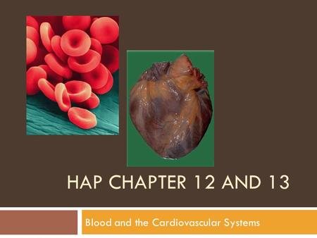 Blood and the Cardiovascular Systems