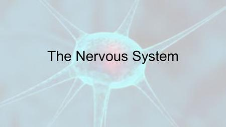 The Nervous System. Vocabulary! 1.Neuron 2.Dendrites 3.Axon 4.Synapses 5.Central Nervous System 6.Peripheral Nervous System 7.Cerebrum 8.Reflex.
