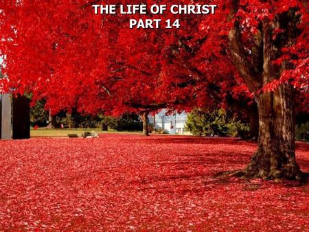 THE LIFE OF CHRIST PART 14 THE LIFE OF CHRIST PART 14.