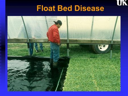 Float Bed Disease. Diseases - Bacterial Black leg - Erwinia sp. Same as hollow stalk & barn rot (houseburn) Same as hollow stalk & barn rot (houseburn)