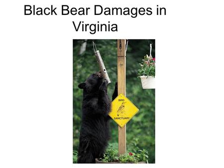 Black Bear Damages in Virginia. Executive Summary Analyze incidents of damage performed by black bears based upon county of incidence and type of occurrence.