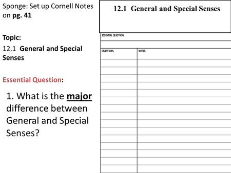 Sponge: Set up Cornell Notes on pg. 41 Topic: 12.1 General and Special Senses Essential Question: 2.1 Atoms, Ions, and Molecules 12.1 General and Special.