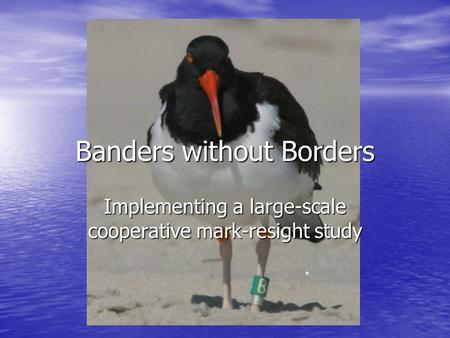 Banders without Borders Implementing a large-scale cooperative mark-resight study.