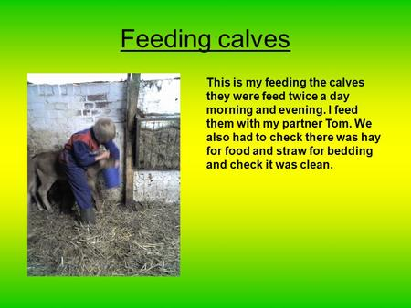 Feeding calves This is my feeding the calves they were feed twice a day morning and evening. I feed them with my partner Tom. We also had to check there.
