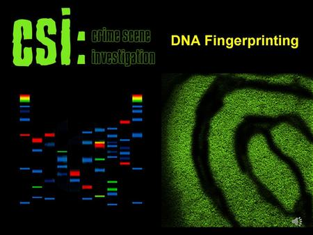 DNA fingerprinting, also called forensic DNA analysis, is considered by many to be the police investigator's secret weapon, a means of building cases.