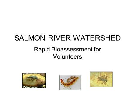 Rapid Bioassessment for Volunteers SALMON RIVER WATERSHED.