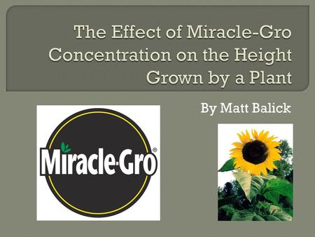 By Matt Balick.  Problem Statement- Does the concentration of Miracle-Gro affect the height that a plant will grow?  Hypothesis- If a plant is given.