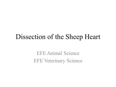 Dissection of the Sheep Heart