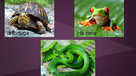 El serpiente la ranala tortuga. Práctica guiada Replace the emojis with the correct Spanish words. Then translate the paragraph. una granja - a farm la.