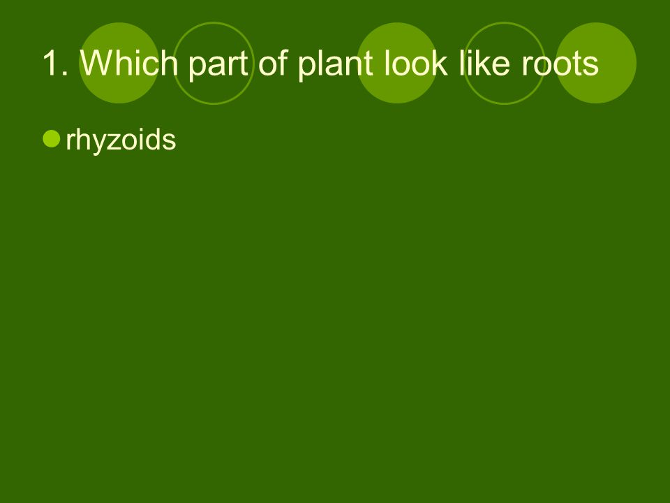 2. Which parts look like true stems and leaves Green stem like and leaf like structures