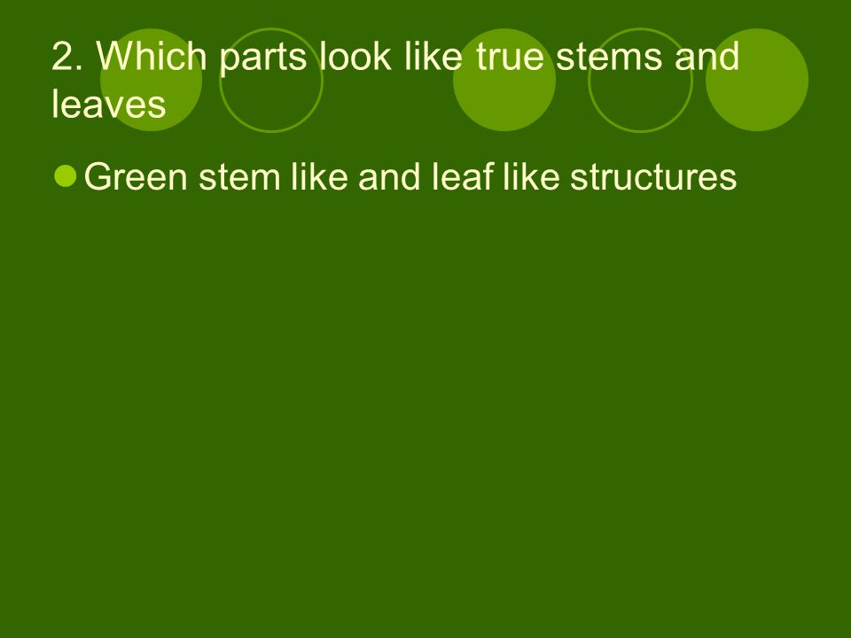 3.Why do scientists call these moss parts roots, stems and leaves.