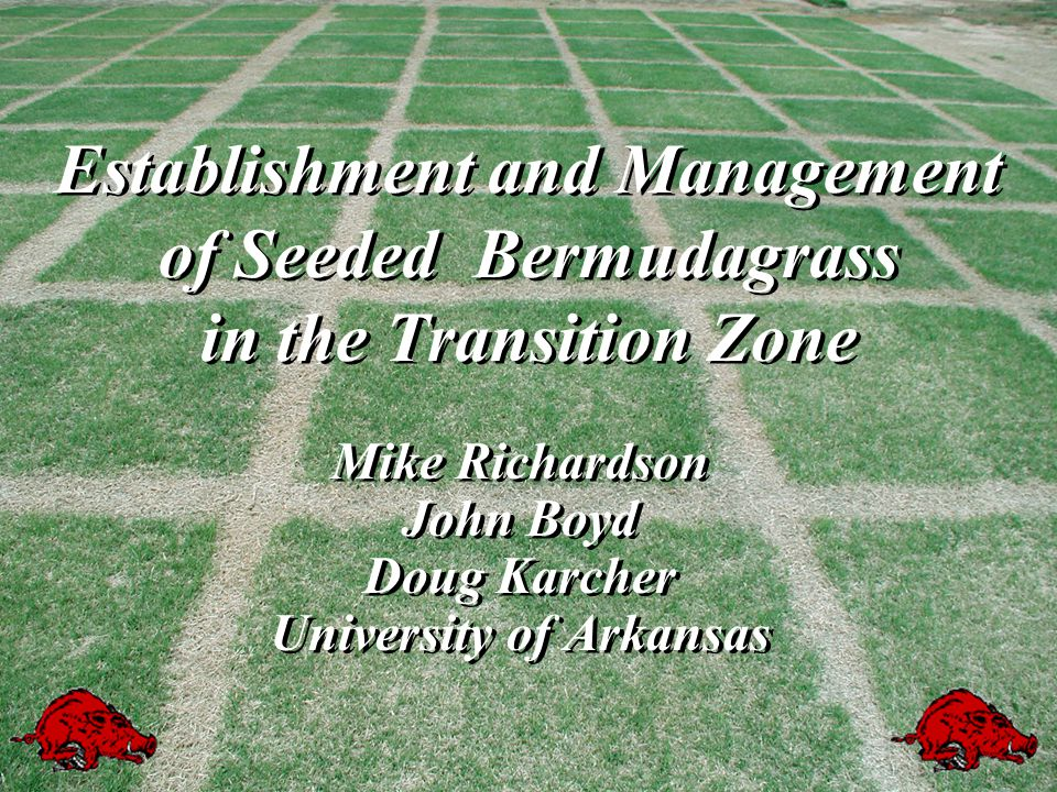 Challenges facing seeded bermudagrass in the upper transition zones Short growing seasonShort growing season Germination is slow and seedlings are slow to develop - poor competitorsGermination is slow and seedlings are slow to develop - poor competitors Warm-season grassy and broadleaf weeds may be difficult to controlWarm-season grassy and broadleaf weeds may be difficult to control Winter injury due to poor development will be a major problem in the first seasonWinter injury due to poor development will be a major problem in the first season Short growing seasonShort growing season Germination is slow and seedlings are slow to develop - poor competitorsGermination is slow and seedlings are slow to develop - poor competitors Warm-season grassy and broadleaf weeds may be difficult to controlWarm-season grassy and broadleaf weeds may be difficult to control Winter injury due to poor development will be a major problem in the first seasonWinter injury due to poor development will be a major problem in the first season