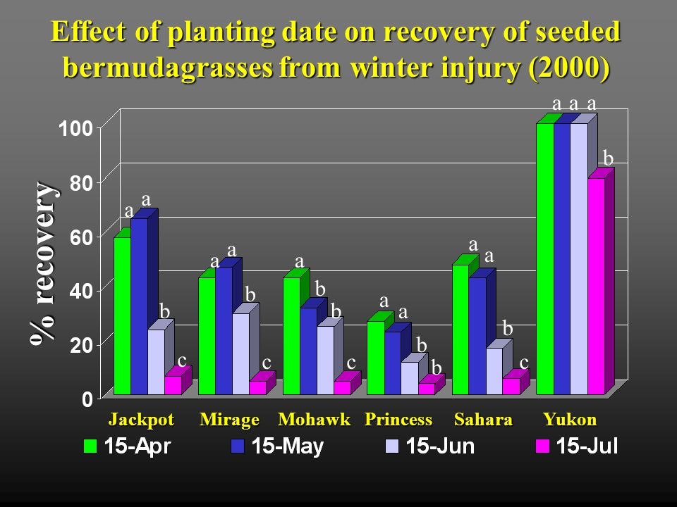 April 15 planting May 15 planting Mirage Yukon PrincessJackpot Yukon Photo on April 28, 2001