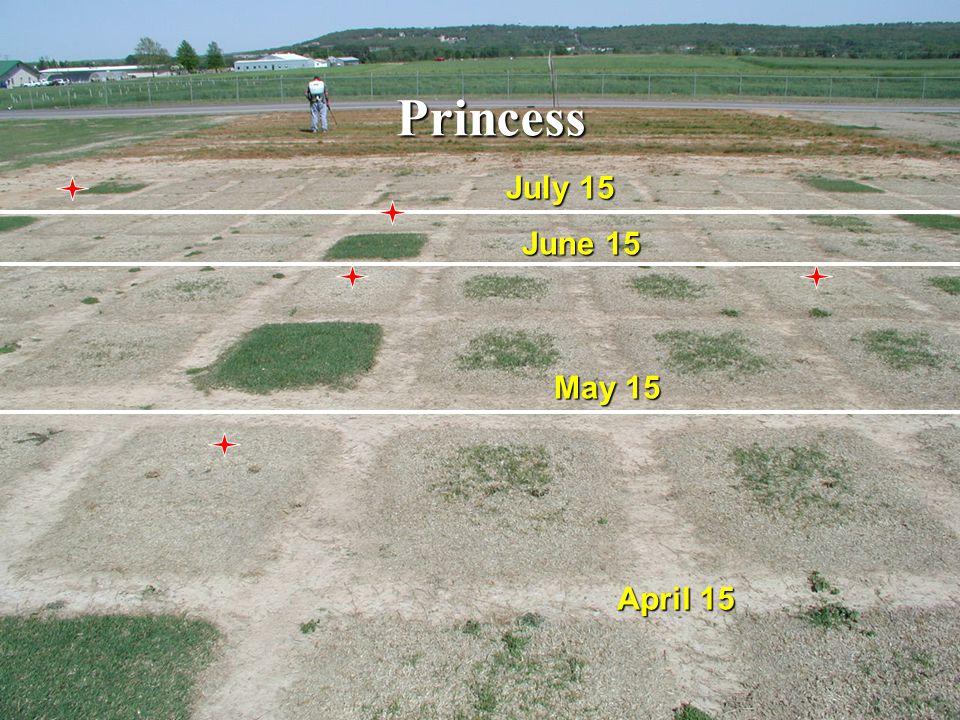 Mirage May 15 June 15 July 15 April 15