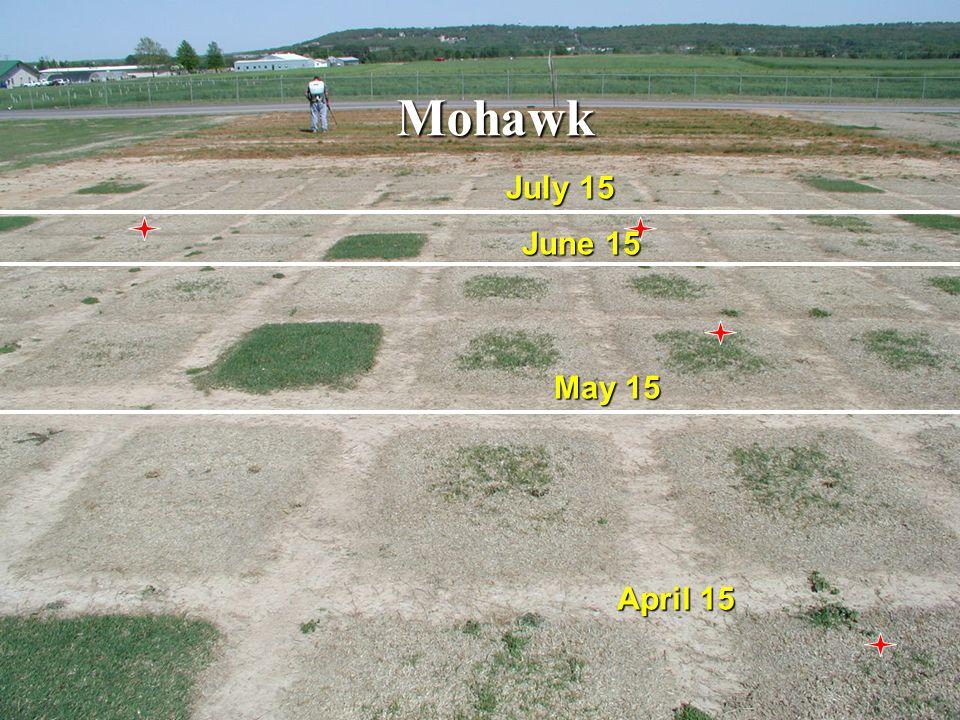 Effect of planting date on recovery of seeded bermudagrasses from winter injury (2001) 0 20 40 60 80 100 15-Apr15-May15-Jun15-Jul % recovery MirageMohawkPrincessSaharaYukonJackpot a a b c a a b b a a b c a a b c a a b c a a a a