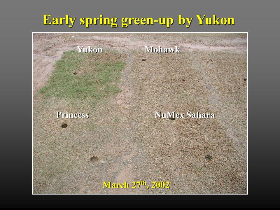 April 5 th, 2002 Mohawk Princess NuMex Sahara Yukon