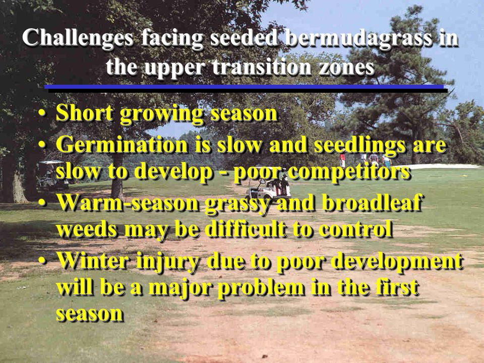 Todays Summary Winter SurvivalWinter Survival –Determine seeding date which optimizes first-year winter survival Weed ControlWeed Control –Develop post-emergent weed control strategies for establishing seeded bermudagrass