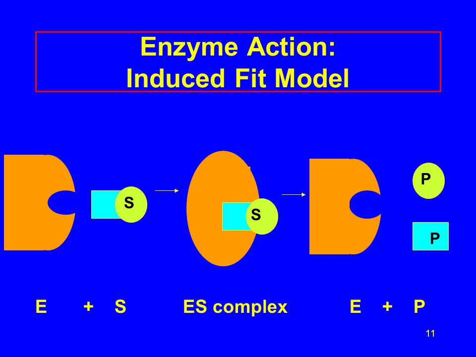 12 Learning Check E2 A.The active site is (1) the enzyme (2) a section of the enzyme (3) the substrate B.