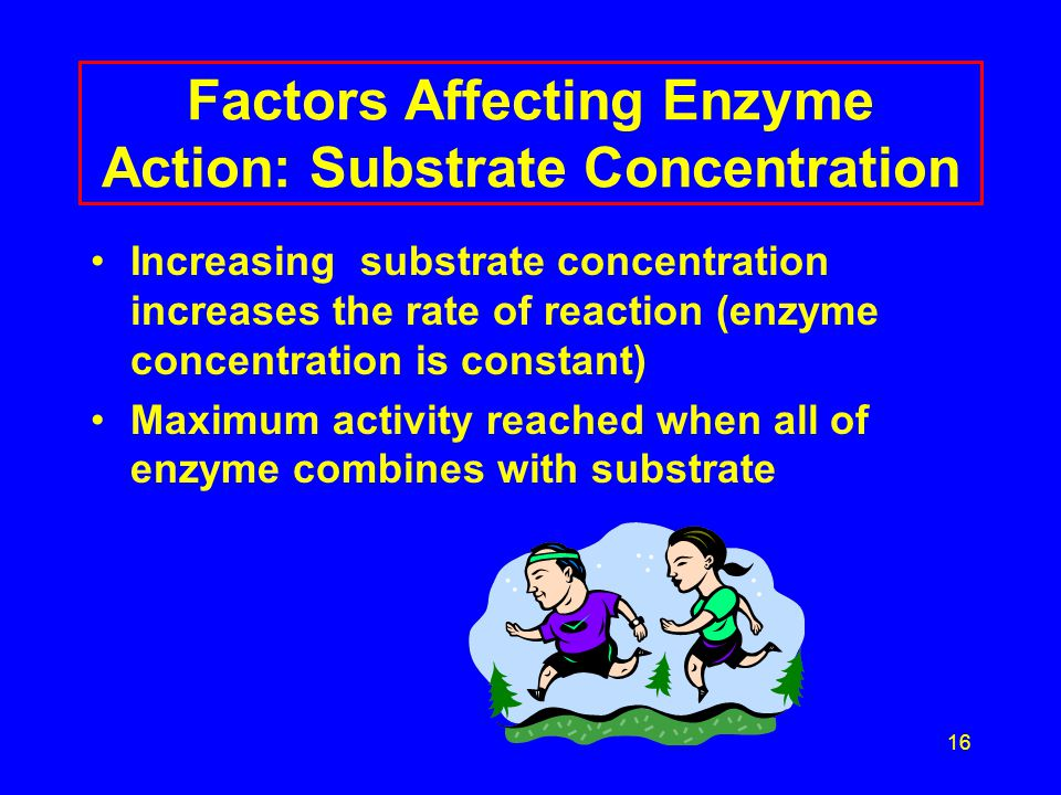 17 Factors Affecting Enzyme Action Maximum activity Reaction Rate substrate concentration