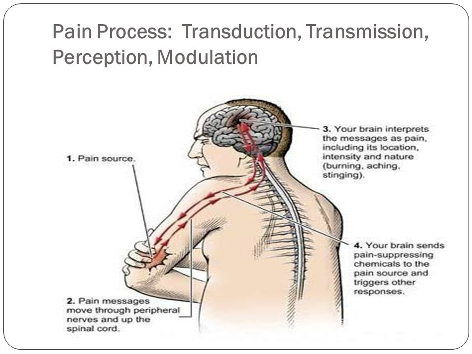 Stimulator of Nociceptors or Pain Receptors Bradykinin: powerful vasodilator, trigger release of histamine (redness, swelling, inflammation) Prostaglandins: hormone-like substances that send additional pain stimuli to the CNS Substance P: sensitized receptors on nerves to feel pain These are Neurotransmitters: substances that excite or inhibit target nerve cells