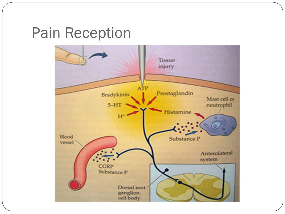 Pain Receptor Stimulators Mechanical - friction Thermal - heat or cold Chemical - acid Electrical- static electricity