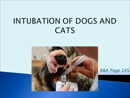 How To Intubate Dog Cat