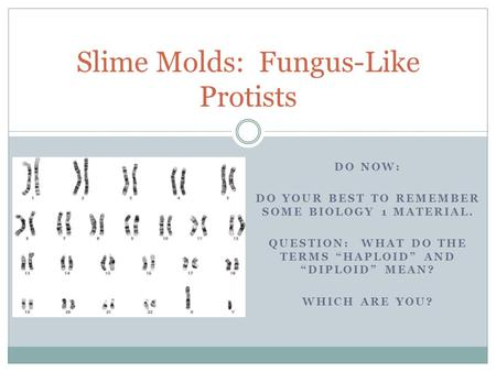 "DO NOW: DO YOUR BEST TO REMEMBER SOME BIOLOGY 1 MATERIAL. QUESTION: WHAT DO THE TERMS ""HAPLOID"" AND ""DIPLOID"" MEAN? WHICH ARE YOU? Slime Molds: Fungus-Like."