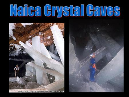 The largest natural crystals on Earth have been discovered in two caves within a silver and zinc mine near Naica, in Chihuahua, Mexico, according to.