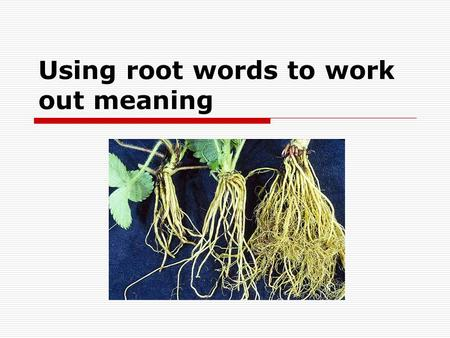 Using root words to work out meaning. Instructions  Get out your vocabulary books  Turn to the back  Write the title ' Roots Words '  ….then write.