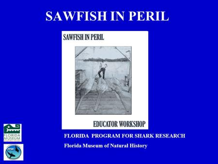 SAWFISH IN PERIL FLORIDA PROGRAM FOR SHARK RESEARCH Florida Museum of Natural History.