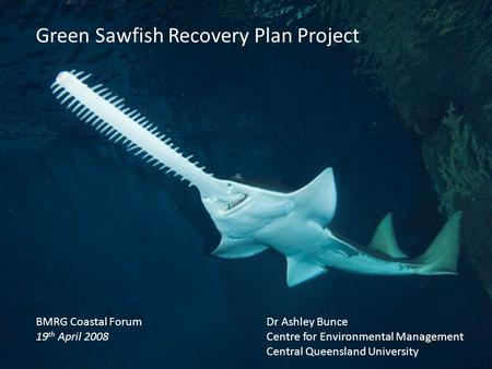 BMRG Coastal Forum 19 th April 2008 Green Sawfish Recovery Plan Project Dr Ashley Bunce Centre for Environmental Management Central Queensland University.