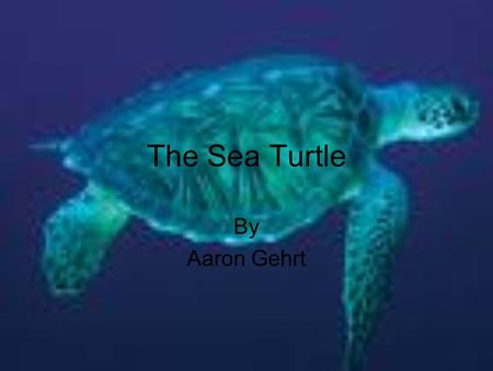 The Sea Turtle By Aaron Gehrt.