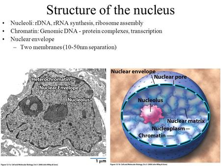 Structure of the nucleus