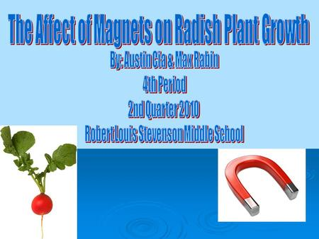 Testable question: Will a radish plant grow towards a magnet? Hypothesis: If we put a magnet next to a radish plant the radish will grow towards the magnet.