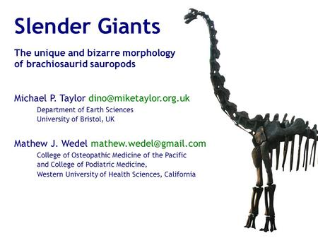 Slender Giants The unique and bizarre morphology of brachiosaurid sauropods Michael P. Taylor Mathew J. Wedel