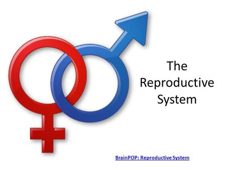 The Reproductive System BrainPOP: Reproductive System.