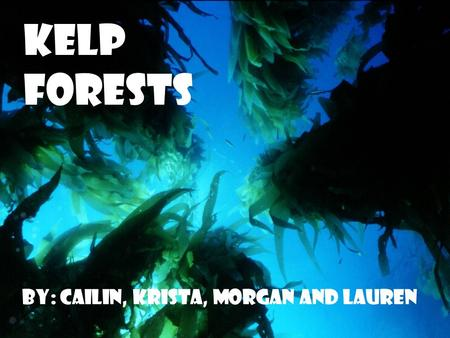 Kelp Forests By: Cailin, Krista, Morgan and Lauren.