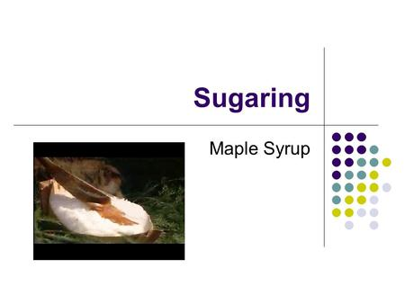 Sugaring Maple Syrup. Quiz Quiz Trade Concentration 6 drops of dye in 40 mL of water 6 drops of dye in 1 mL Boil Off 39 mL.