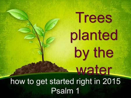Trees planted by the water how to get started right in 2015 Psalm 1.